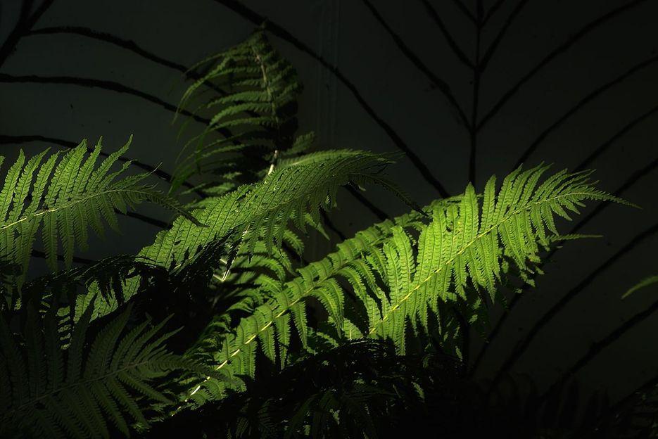 fsm-blog-natur01-farn