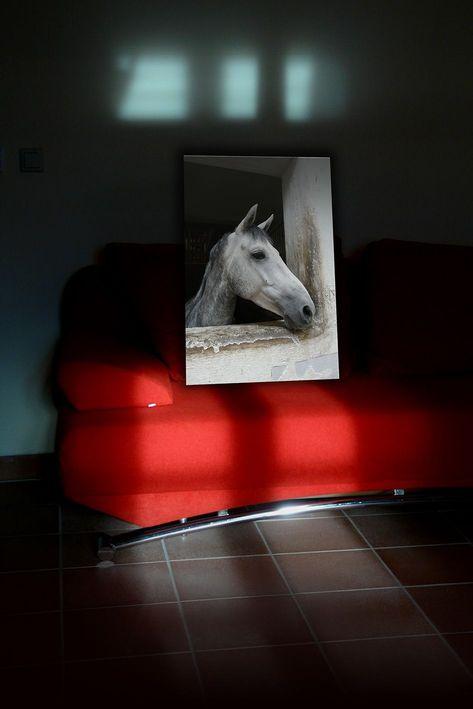 fsm-portfolio-digital-das-pferd-auf-dem-sofa