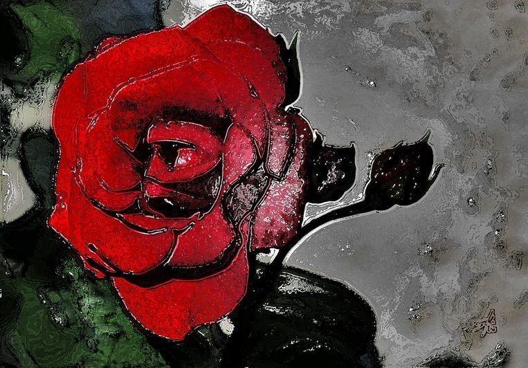fsm-portfolio-digital-glaenzende-rose